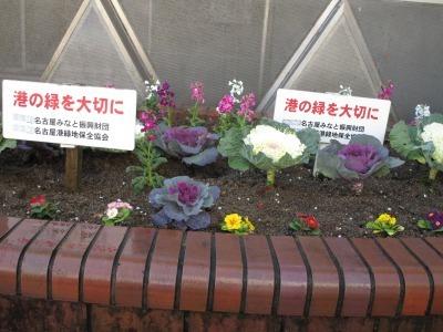 ガーデンふ頭総合案内所前花壇の植替えR1.12.23_d0338682_10371197.jpg