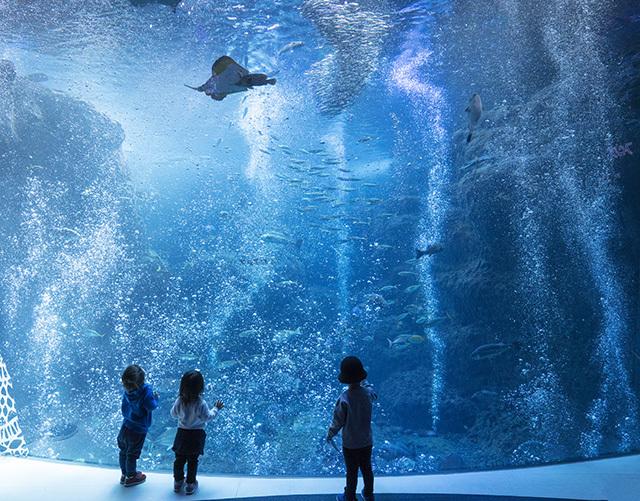 新江ノ島水族館クリスマ2019 ヒカリノエノスイ_b0145398_23233863.jpg