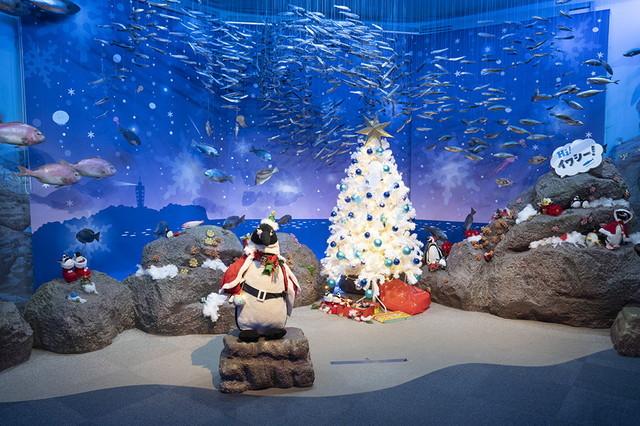 新江ノ島水族館クリスマ2019 ヒカリノエノスイ_b0145398_23301963.jpg