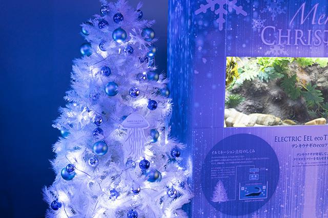 新江ノ島水族館クリスマ2019 ヒカリノエノスイ_b0145398_23373141.jpg