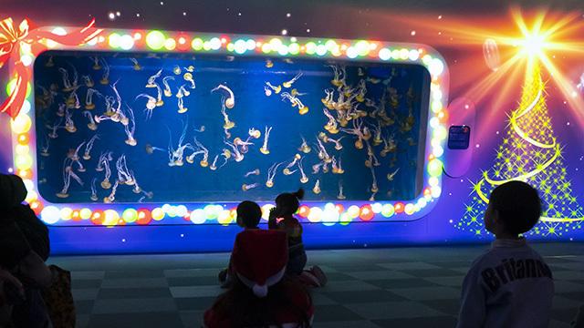 新江ノ島水族館クリスマ2019 ヒカリノエノスイ_b0145398_23375747.jpg