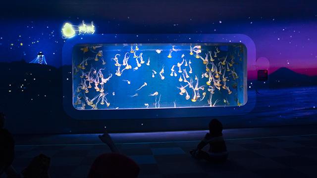 新江ノ島水族館クリスマ2019 ヒカリノエノスイ_b0145398_23381680.jpg