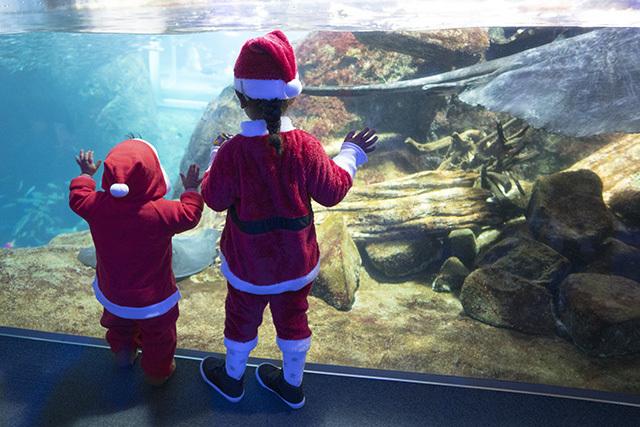 新江ノ島水族館クリスマ2019 ヒカリノエノスイ_b0145398_23384369.jpg