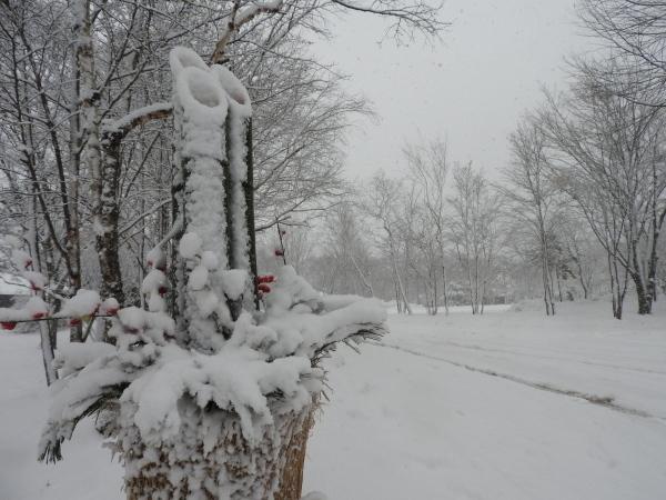今週末の天気と気温(2019年12月26日):追記あり_b0174425_12061656.jpg