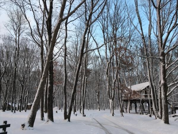 今週末の天気と気温(2019年12月26日):追記あり_b0174425_20215361.jpeg