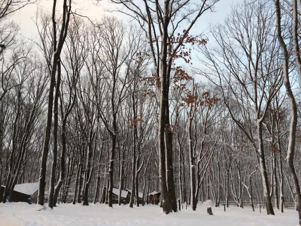今週末の天気と気温(2019年12月26日):追記あり_b0174425_20220974.jpeg