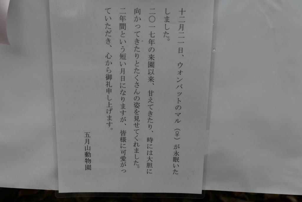 池田市 五月山動物園 マルちゃん安らかに_f0050534_17494632.jpg