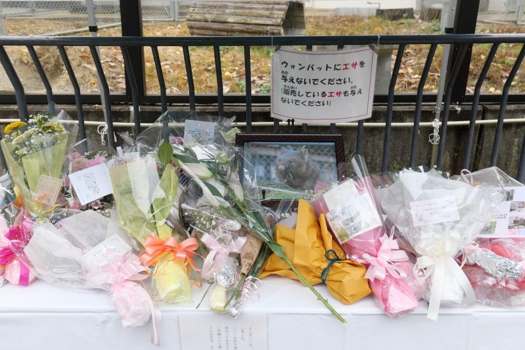 池田市 五月山動物園 マルちゃん安らかに_f0050534_17494642.jpg