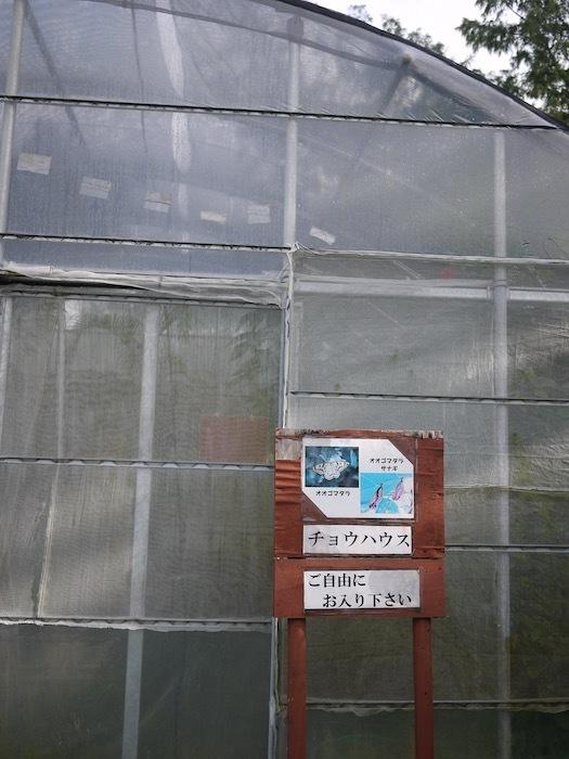 沖縄冬至越えの旅6 オオゴマダラを見にゆく_e0359436_13071011.jpeg