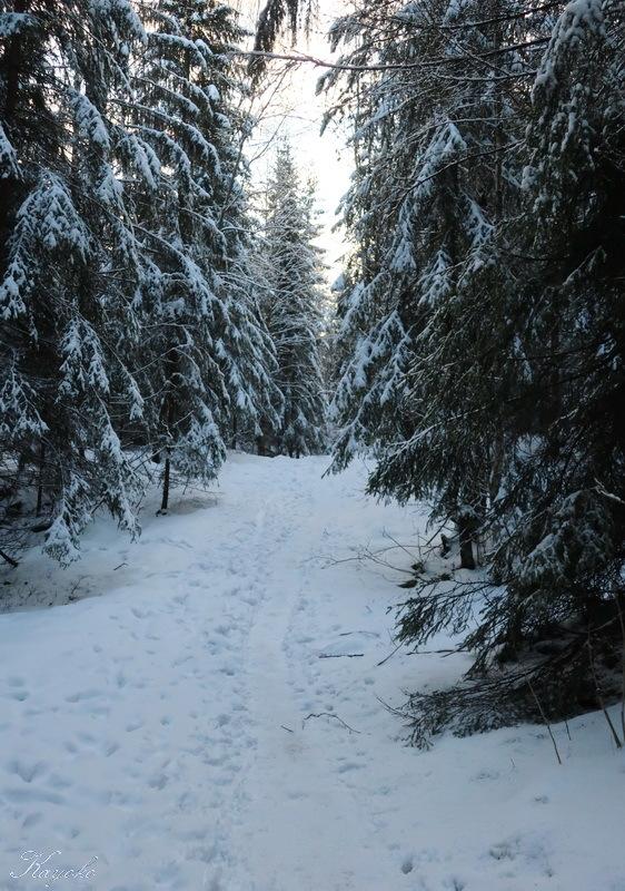 クリスマス・ディナー と 散歩_a0353839_22110314.jpg