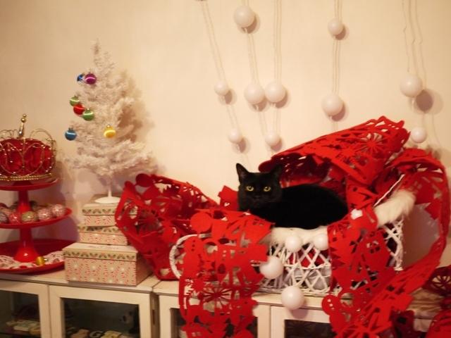 まだまだクリスマス猫 めりぃぽぴんず編。_a0143140_21510372.jpg