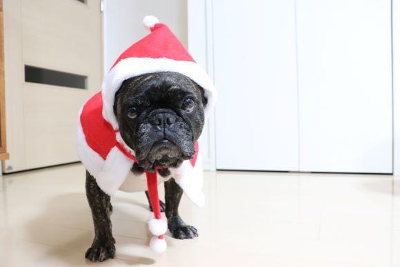 仕事納めとクリスマス振り返り_e0234741_23113896.jpg