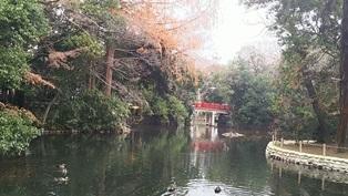 氷川神社からのまるまる東日本 @大宮_b0080342_11272069.jpg