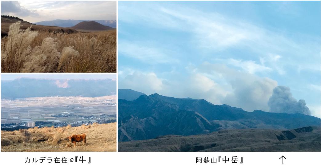 【瞬間的*熊本の旅】噴煙を上げる阿蘇山『中岳』とカルデラ在住の「牛」とサヨナラの「彩雲」!_d0018646_02252294.jpg