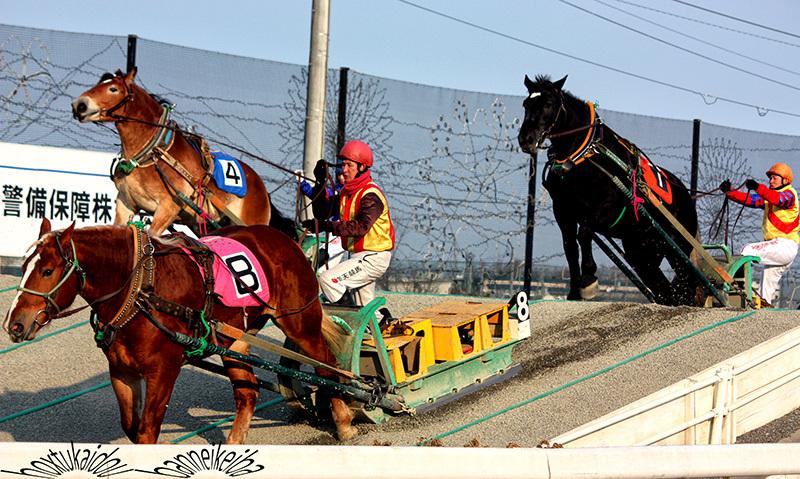 車も手放したし、何処にもいけんから北海道にいる弟に頼んでばんえい競馬、のシエア画像です。_a0057752_21324751.jpg