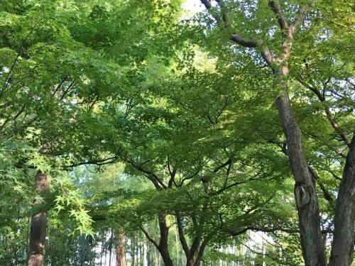 京都の旅\'19Ⅴ 京都裏千家訪問他_e0326953_18283643.jpg