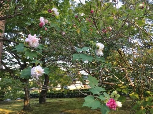 京都の旅\'19Ⅴ 京都裏千家訪問他_e0326953_18304170.jpg