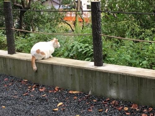 京都の旅\'19Ⅴ 京都裏千家訪問他_e0326953_18531411.jpg