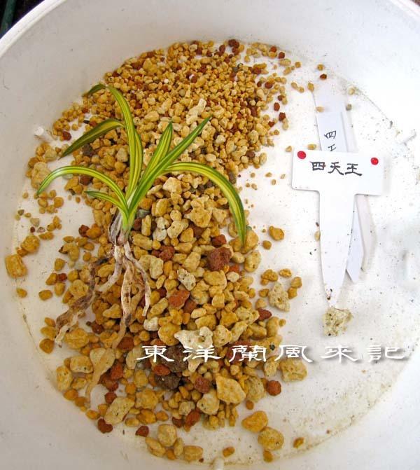 ミニ四天王                         No.1998_d0103457_11045383.jpg