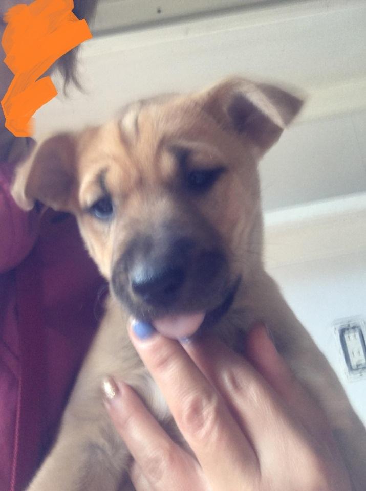 新規・母犬&仔犬のお預かりさん、里親さん、移送ボランティアさん緊急募集!!_c0372561_18083782.jpg