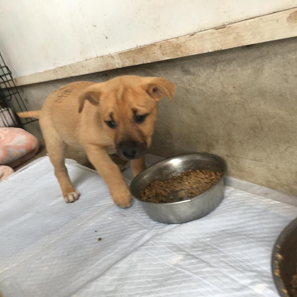 新規・母犬&仔犬のお預かりさん、里親さん、移送ボランティアさん緊急募集!!_c0372561_18085074.jpg