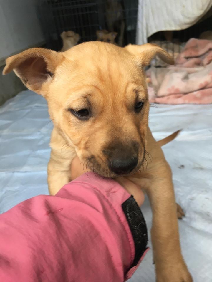 新規・母犬&仔犬のお預かりさん、里親さん、移送ボランティアさん緊急募集!!_c0372561_18275838.jpg