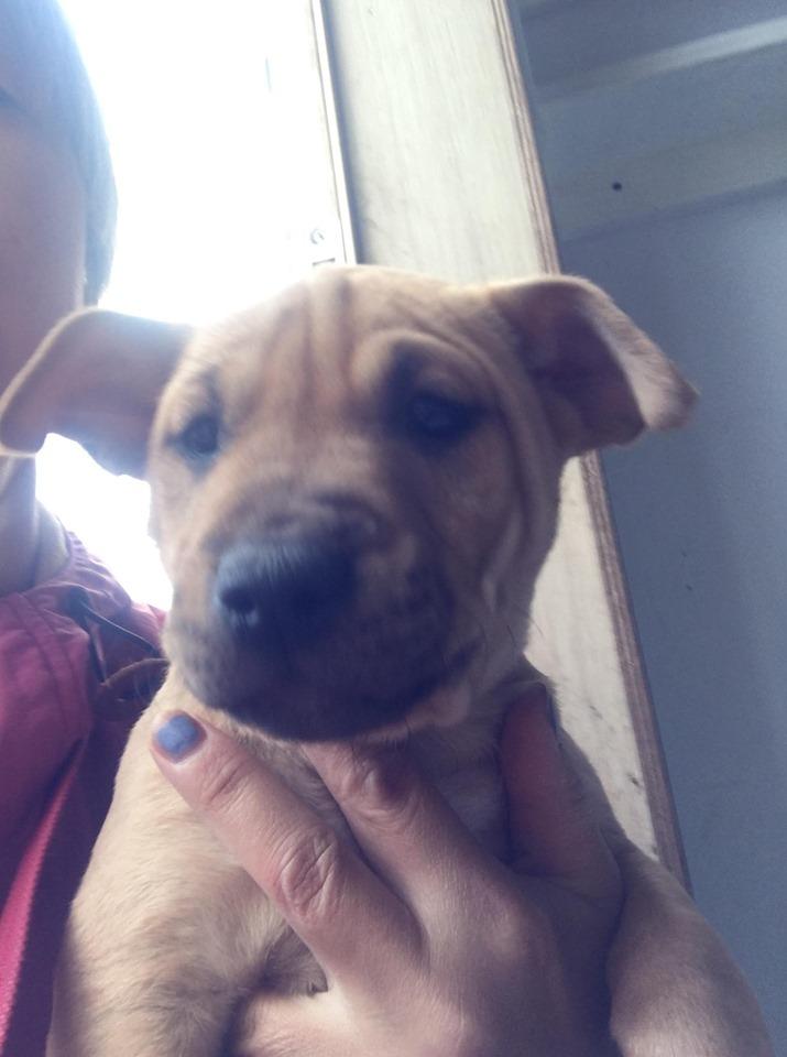 新規・母犬&仔犬のお預かりさん、里親さん、移送ボランティアさん緊急募集!!_c0372561_18280740.jpg