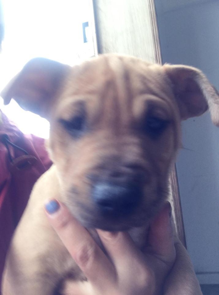 新規・母犬&仔犬のお預かりさん、里親さん、移送ボランティアさん緊急募集!!_c0372561_18281234.jpg