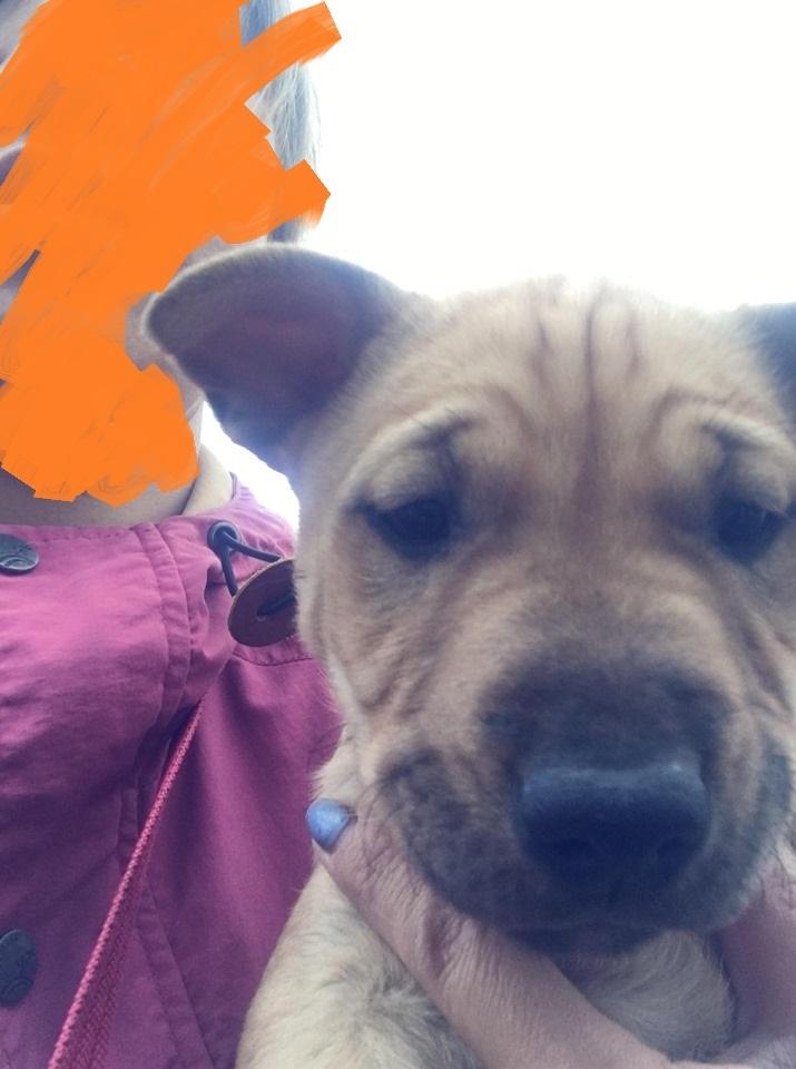 新規・母犬&仔犬のお預かりさん、里親さん、移送ボランティアさん緊急募集!!_c0372561_18330522.jpg