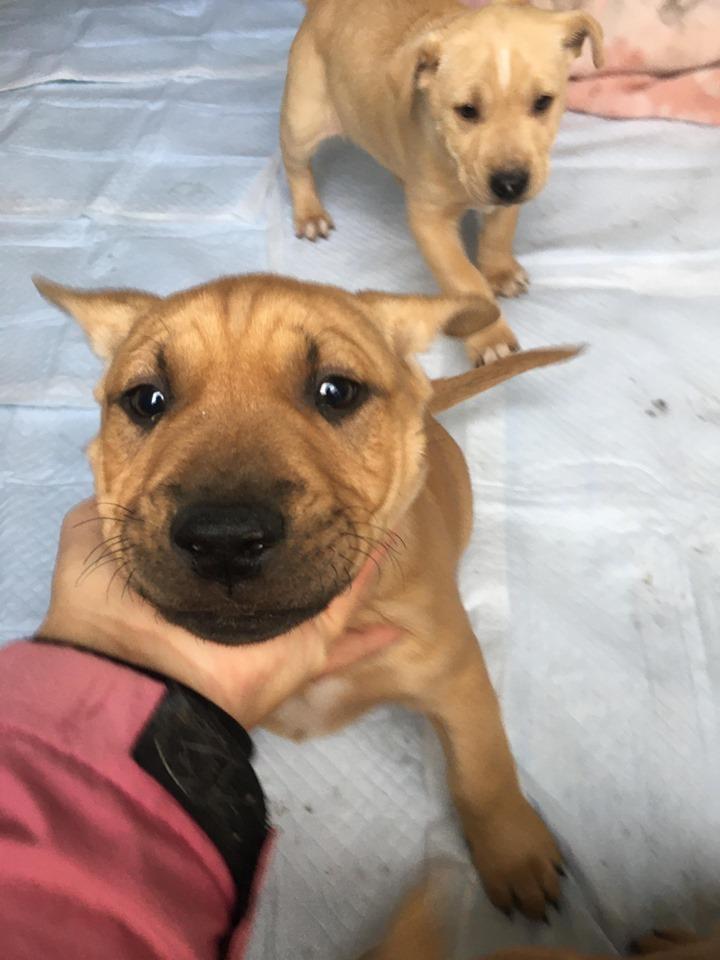 新規・母犬&仔犬のお預かりさん、里親さん、移送ボランティアさん緊急募集!!_c0372561_18335635.jpg