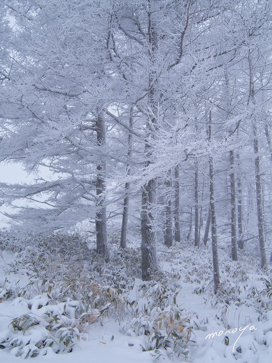 厳冬の高原_c0085877_09314845.jpg
