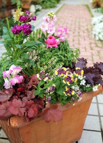 ◆やっと春の寄せ植え作りました!_e0154682_00351433.jpg