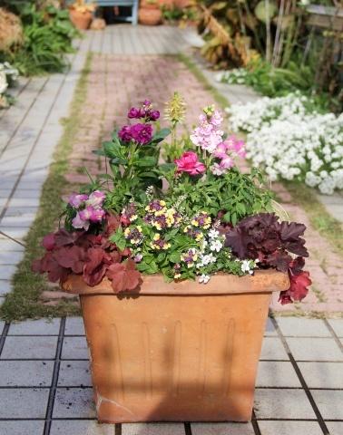 ◆やっと春の寄せ植え作りました!_e0154682_00352255.jpg