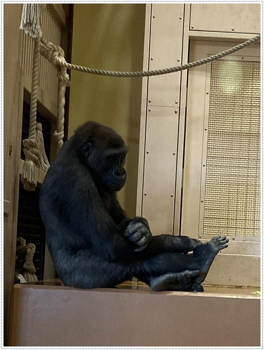 愛知県(名古屋周辺)でのお出かけ その5  東山動物園 (11月29日)やっぱりシャバーニに会わなくっちゃね_b0175688_00164881.jpg