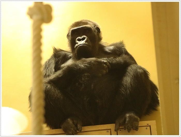愛知県(名古屋周辺)でのお出かけ その5  東山動物園 (11月29日)やっぱりシャバーニに会わなくっちゃね_b0175688_00193894.jpg