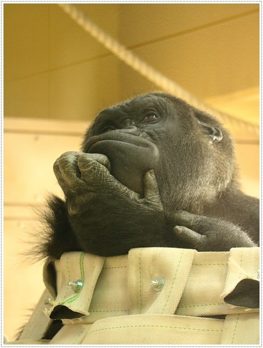 愛知県(名古屋周辺)でのお出かけ その5  東山動物園 (11月29日)やっぱりシャバーニに会わなくっちゃね_b0175688_00194245.jpg