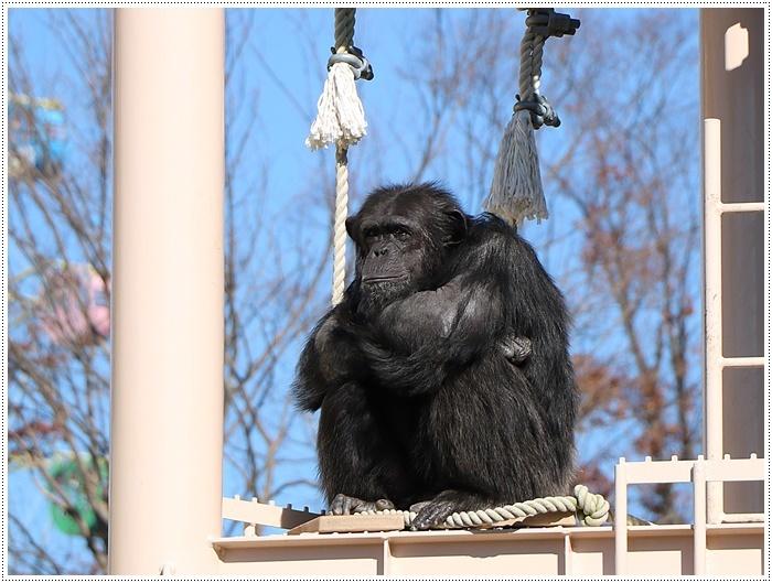 愛知県(名古屋周辺)でのお出かけ その5  東山動物園 (11月29日)やっぱりシャバーニに会わなくっちゃね_b0175688_00215654.jpg