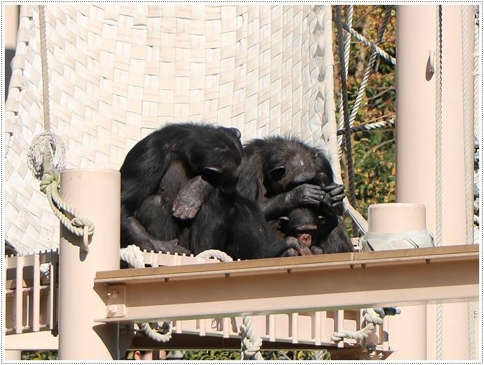 愛知県(名古屋周辺)でのお出かけ その5  東山動物園 (11月29日)やっぱりシャバーニに会わなくっちゃね_b0175688_00220094.jpg