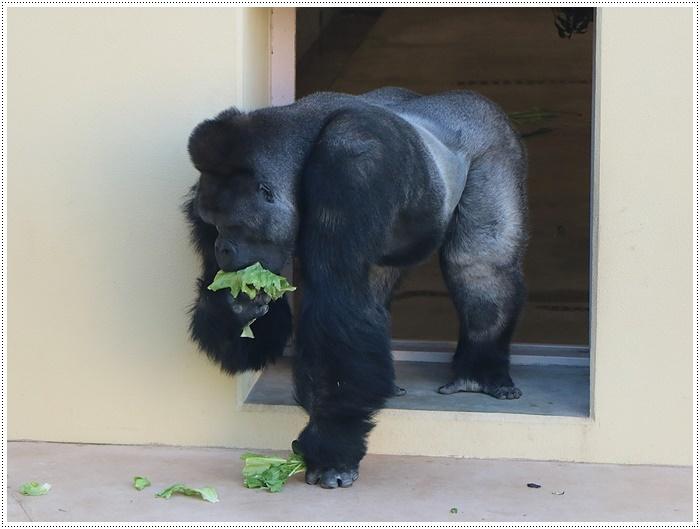 愛知県(名古屋周辺)でのお出かけ その5  東山動物園 (11月29日)やっぱりシャバーニに会わなくっちゃね_b0175688_00253231.jpg