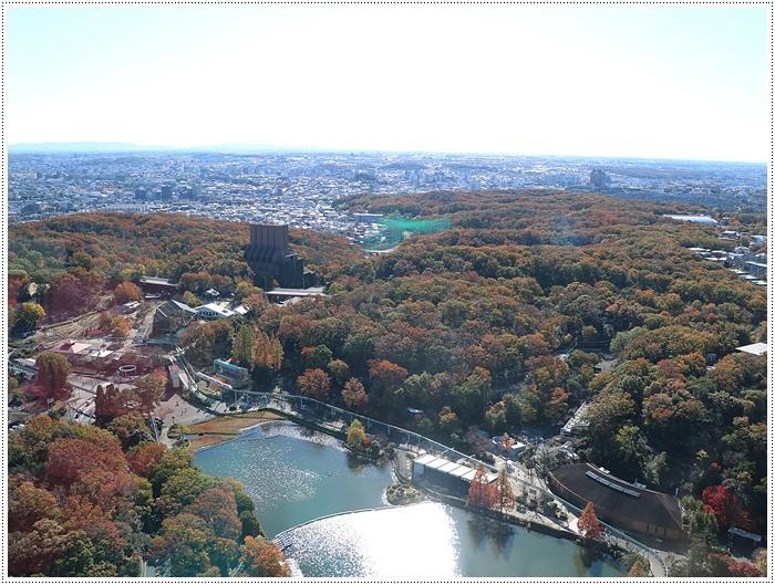 愛知県(名古屋周辺)でのお出かけ その5  東山動物園 (11月29日)やっぱりシャバーニに会わなくっちゃね_b0175688_00284661.jpg