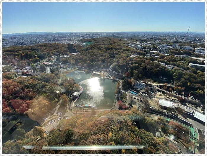 愛知県(名古屋周辺)でのお出かけ その5  東山動物園 (11月29日)やっぱりシャバーニに会わなくっちゃね_b0175688_00290787.jpg