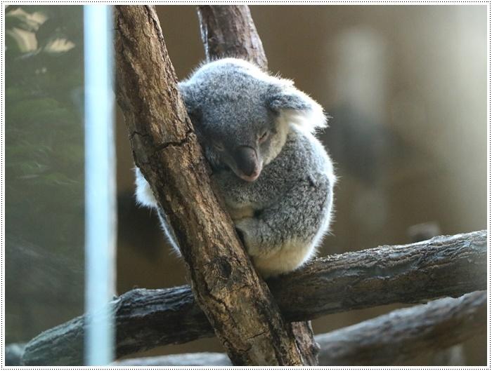 愛知県(名古屋周辺)でのお出かけ その5  東山動物園 (11月29日)やっぱりシャバーニに会わなくっちゃね_b0175688_00311909.jpg