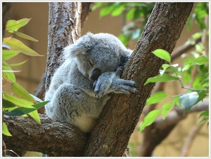 愛知県(名古屋周辺)でのお出かけ その5  東山動物園 (11月29日)やっぱりシャバーニに会わなくっちゃね_b0175688_00312373.jpg