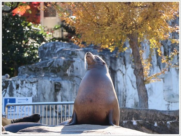 愛知県(名古屋周辺)でのお出かけ その5  東山動物園 (11月29日)やっぱりシャバーニに会わなくっちゃね_b0175688_00350529.jpg