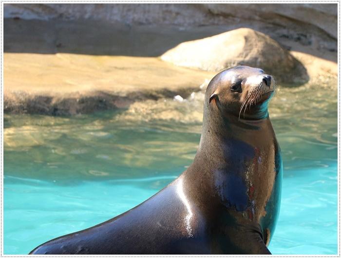 愛知県(名古屋周辺)でのお出かけ その5  東山動物園 (11月29日)やっぱりシャバーニに会わなくっちゃね_b0175688_00350817.jpg