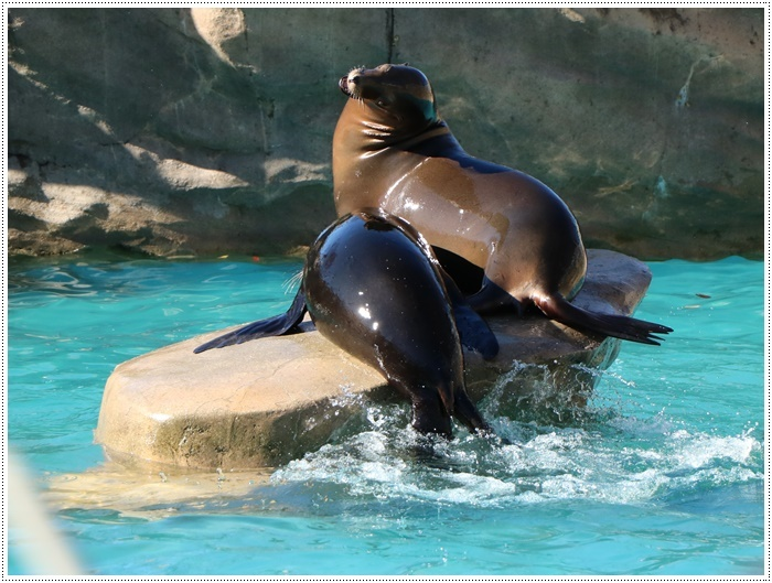 愛知県(名古屋周辺)でのお出かけ その5  東山動物園 (11月29日)やっぱりシャバーニに会わなくっちゃね_b0175688_00351133.jpg