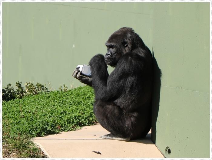 愛知県(名古屋周辺)でのお出かけ その5  東山動物園 (11月29日)やっぱりシャバーニに会わなくっちゃね_b0175688_00383409.jpg