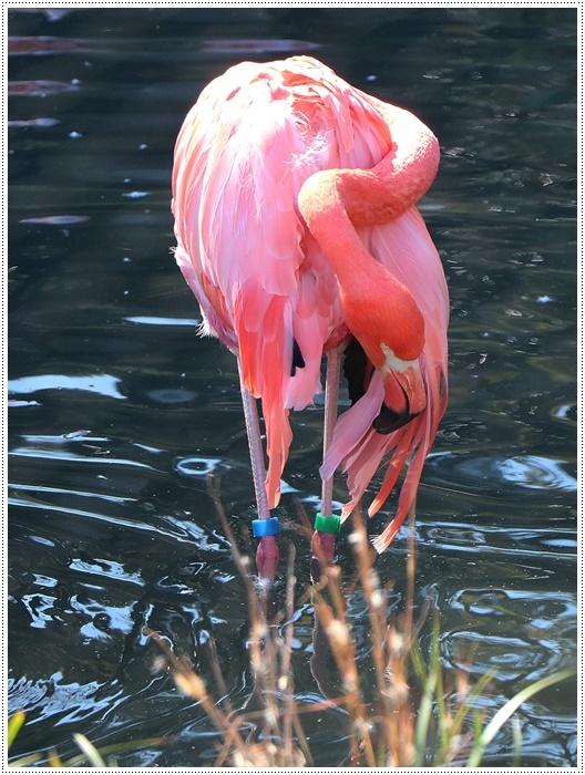 愛知県(名古屋周辺)でのお出かけ その5  東山動物園 (11月29日)やっぱりシャバーニに会わなくっちゃね_b0175688_00392142.jpg