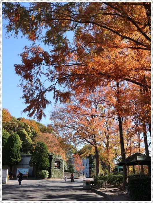 愛知県(名古屋周辺)でのお出かけ その5  東山動物園 (11月29日)やっぱりシャバーニに会わなくっちゃね_b0175688_00403205.jpg