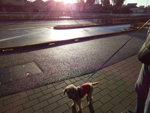 No.4494 12月29日(日):2019年は愛犬パルが我が家にやってきた!_b0113993_22053144.jpg